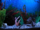 Встроенный аквариум с цихлидами